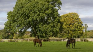 Horses grazing at the National Stud, County Kildare