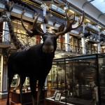 Museo Nacional de Irlanda: Historia Natural