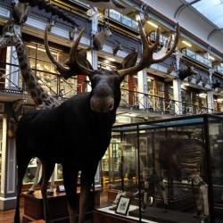 Museo Nacional de Irlanda de Historia Natural