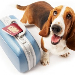Llevar perros o mascotas a Irlanda
