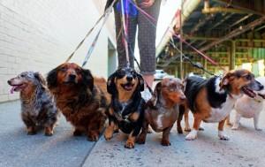 Paseador de perros en Irlanda