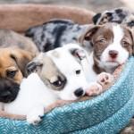 Cómo tener tu mascota en Irlanda contigo | Datos útiles para traerla