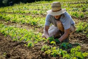 Trabajar en granjas en Irlanda