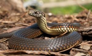 Serpientes, mitos y leyendas irlandesas